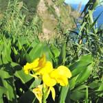 flores blumen