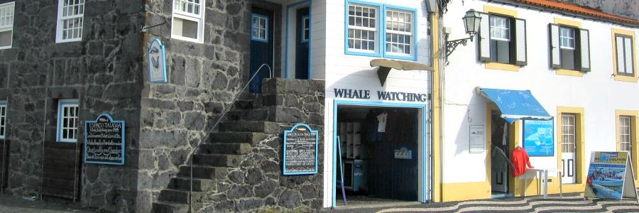 Whale und Dolphine-Watching auf Pico