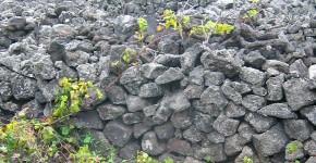 Wein auf Pico